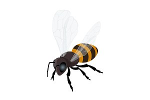 Honey bee vector icon.