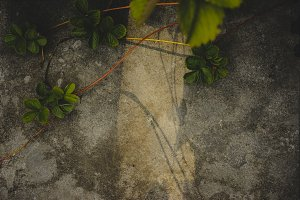 Sunlight on Concrete with Plant