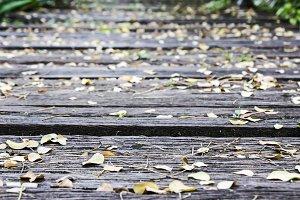 Dry leaves on old wood