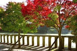 Autumn trees in Japan