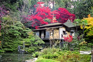 Ancient traditional Japanese garden