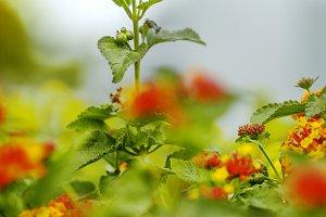 Nature vintage autumn flowers