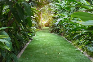 landscape of pathway in garden