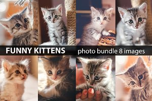 Funny kittens photo bundle