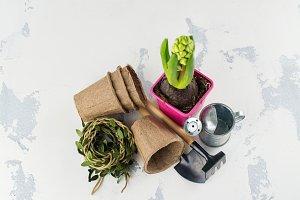 Springtime or gardening concept