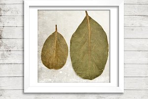 Bay leaves, laurel leaves
