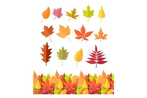 Set of Tree Leaf Icons. Autumn Leaves Isolated