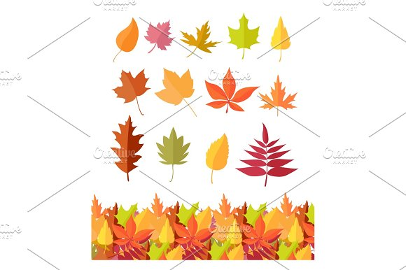Set Of Tree Leaf Icons Autumn Leaves Isolated