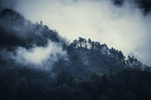 Gloomy forest in mist