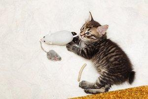 Kitten and toys