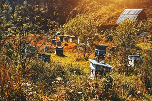 Beehives on autumn meadow