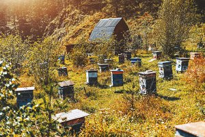 Beehives on autumn apiary, meadow