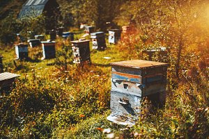 Beehive of apiary, autumn