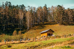 Apiary on autumn Altai meadow