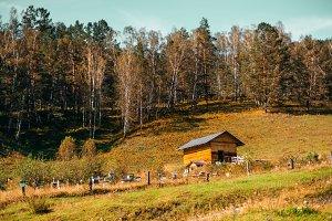 Apiary on autumn Altai meadow