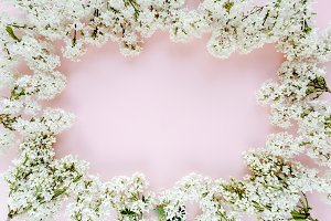 White lilac on a pink background