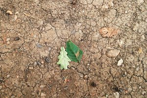 Dirty Cracked Soil with leaves
