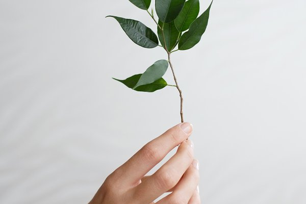 Woman's hand and branch of plant