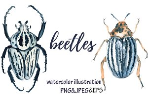 beetles. watercolor illustration