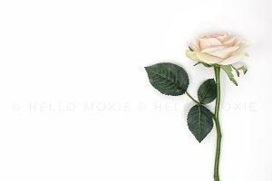 Pink Rose Flat Lay Image