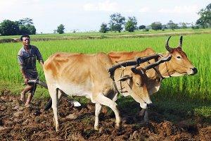 Cambodian local farmer