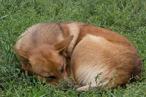 Sleeping homeless dog - beggar in grass