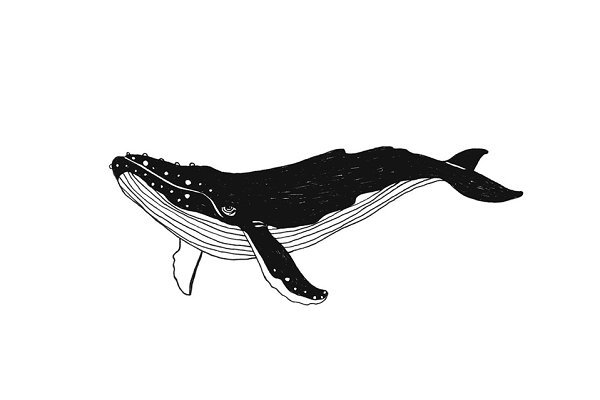 Whale illustration and backgrounds