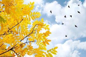 departing birds against blue sky