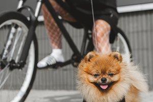 Girl with dog on bike