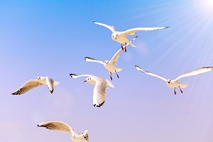 flying sea white gulls