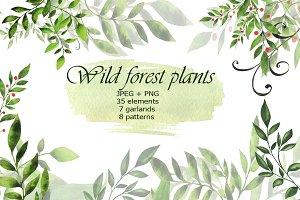 Wild forest plants