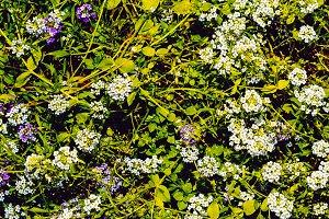 Wildflowers Background. Minimal