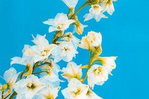 Blooming Flower minimal design art