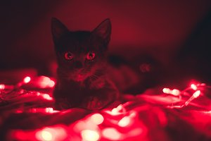 Cat lights