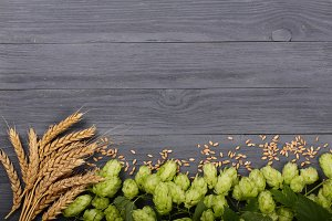 Fresh green hop cones with ears of wheat on black wooden background. Top view with copy space for your text