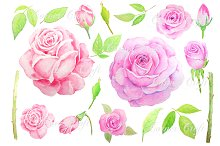 Watercolor Vintage Pink Rose Clipart