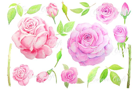 Watercolor Vintage Pink Rose Clipart ~ Illustrations on Creative ...