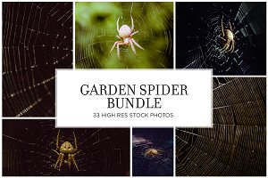 Garden Spider Stock Bundle