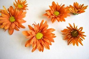 Mix of Orange Flowers