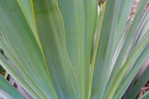 Kiawah Palms