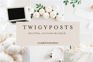 Neutral Autumn Stock Photos