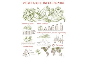 Vegetable infographics design with charts