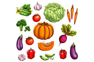 Vegetable and farm market veggies sketches