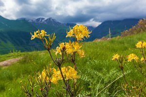 Yellow flowers growing in mountains