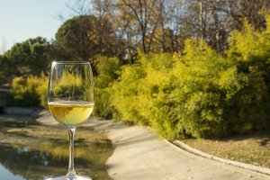 glass of white wine, wooded landscap