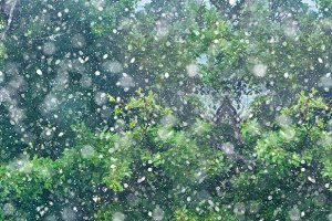 Christmas snow fall forest background banner
