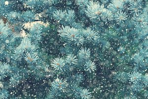 Snow fall in winter forest. Christmas magic