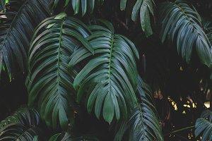 Dark Green Jungle Leaves
