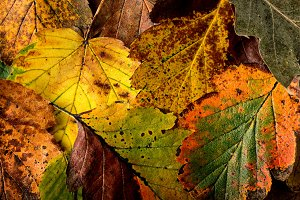 Texture of colorful leaves