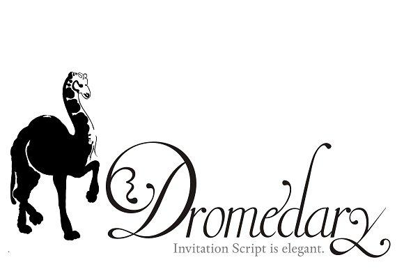 Invitation script script fonts creative market stopboris Choice Image